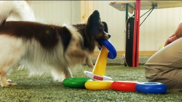 Trickspiele Hunde 2 – Dog for Fun Training (DVD)