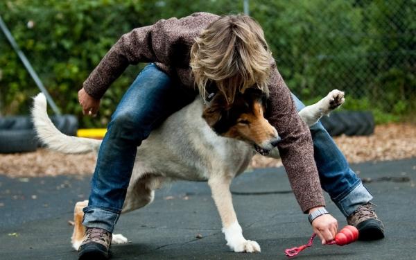 Mit Dem Hund Nach Dänemark
